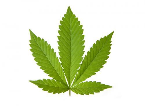 Illinois Legislature Clarifies Cannabis Act to Protect Employers Engaged in Workplace Marijuana Testing