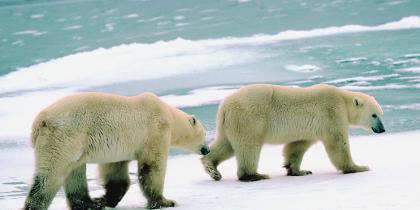 Utah District Court Strikes Down Regulation of Species Under the Endangered Spec